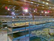 Оборудование для птицефабрики